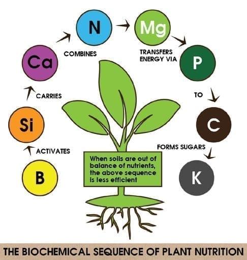 Diagram Plant Health