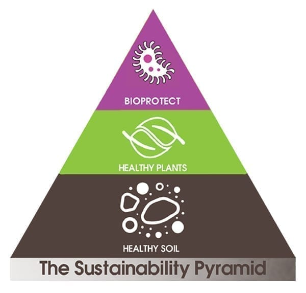 biological pyramid